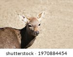 Portrait Of A Deer With Brown...