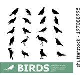 set of birds | Shutterstock .eps vector #197088995