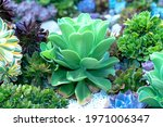 Succulent Flowerbeds Plant In...