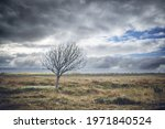 Lonely Tree Without Leaves On A ...