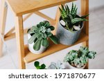 A Pair Of Potted Plants On A...