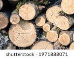 Stack Of Freshly Cut Tree Logs...