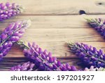 lupines on wooden background....   Shutterstock . vector #197201927