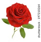 Stock photo red rose isolated on white background 197210264