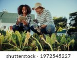 Farmers Working In Vegetable...