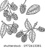 Branches And Leaves Of...