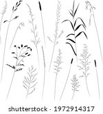 field and meadow grasses  black ... | Shutterstock .eps vector #1972914317