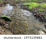 Scenic Spring Stream View In...