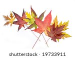 autumnal collection | Shutterstock . vector #19733911
