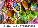 Underwater Life Macro Scene...