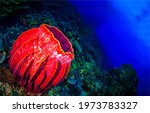 Red sea sponge underwater. sea...