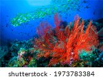 Underwater Coral Fish Shoal...