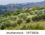 plump italian olive tree... | Shutterstock . vector #1973836