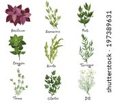 set of nine vector herbs. herbs ... | Shutterstock .eps vector #197389631
