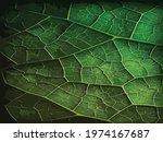 green leaf background texture ... | Shutterstock .eps vector #1974167687