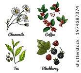 vector food icons of berries ... | Shutterstock .eps vector #1974387374
