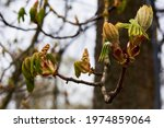Branches of trees and bushes with buds and first leaves in spring