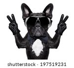 French Bulldog With Victory Or...