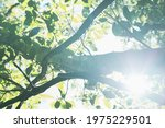 Bright Sun Behind Tree Branches....
