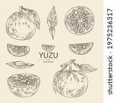 collection of yuzu  fruts ... | Shutterstock .eps vector #1975236317