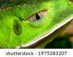 Tropical Green Frog  Amazonia ...