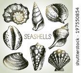 Seashells Hand Drawn Set....