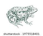 Big Adult Frog Drawn In Vintage ...