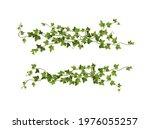 ivy plant branch cartoon vector ... | Shutterstock .eps vector #1976055257