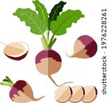 Flat Style Of Turnips Set....