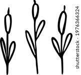 Hand Drawn Tall Cattail....