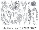 hand drawn edible  algae set. ... | Shutterstock .eps vector #1976728097