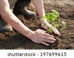 planting  | Shutterstock . vector #197699615