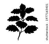 lemon balm bunch branch with...   Shutterstock .eps vector #1977165401