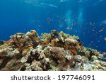 the aquatic life in the red sea | Shutterstock . vector #197746091