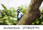 Woodpecker Bird Sitting On Tree