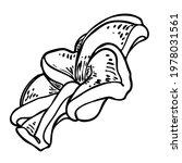 plumeria open buds. traditional ... | Shutterstock .eps vector #1978031561