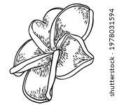 plumeria flower design.... | Shutterstock .eps vector #1978031594