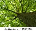 diagonal shot looking up a tree ... | Shutterstock . vector #19781920
