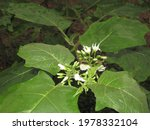 This White Flower Is Found In...