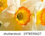 The Blossoming Head Of A...