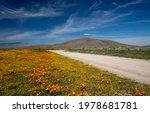 Desert Dirt Road Through Field...