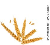 spikelets and grains of wheat... | Shutterstock . vector #197873084