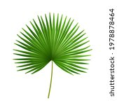 exotic plant of palmetto flower ... | Shutterstock .eps vector #1978878464