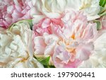fresh bright blooming peonies... | Shutterstock . vector #197900441