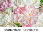fresh bright blooming peonies... | Shutterstock . vector #197900441
