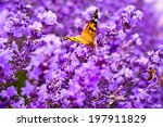 Butterfly On The Flowers Of...