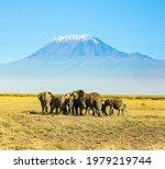 Herd Of Wild Elephants Grazes...