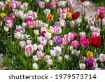 Close Up Of Flower Bed With...
