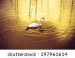 White Swan In Golden Background
