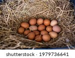 Eggs Are Placed On Straw In...
